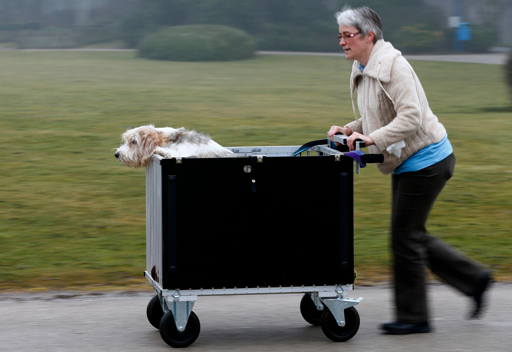 Description of . A woman pushes a dog in a trolley as they arrive for the second day of the Crufts Dog Show in Birmingham, central England March 8, 2013. REUTERS/Darren Staples