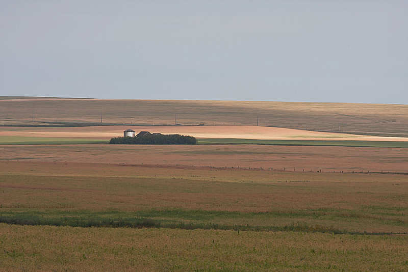 When I was sixteen, I spent part of the summer here learning how to work the land.  How many times did my Uncle Gordon and I drive past these grain sheds as we drove out into the fields. Well, maybe not the metal granary, but in my memory, the wooden granaries have been there forever.