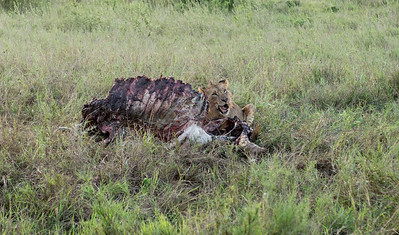 Jhpiego Kenya 2016