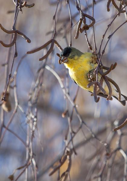 bird-nye-2-1.jpg