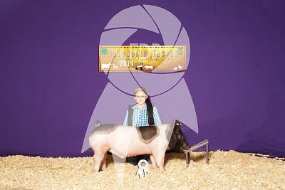 Market Hogs Backdrops