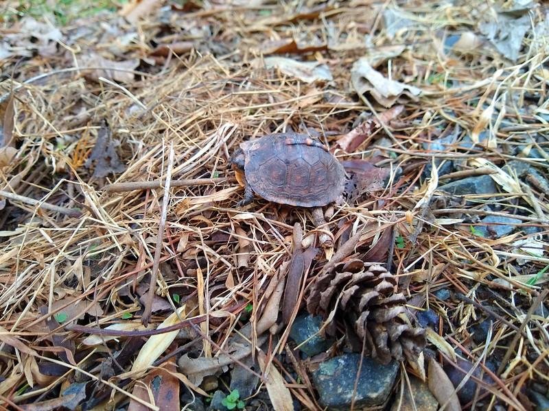 Turtle-002.jpg