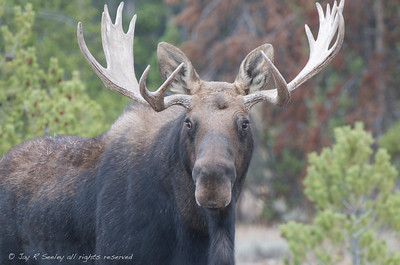 Yellowstone and Grand Tetons wildlife