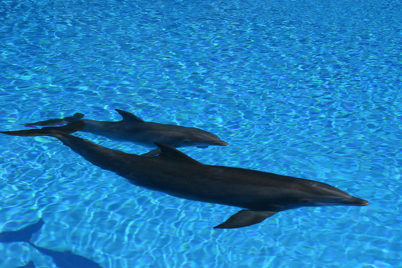 Dolphin Habitat at the Mirage Casino