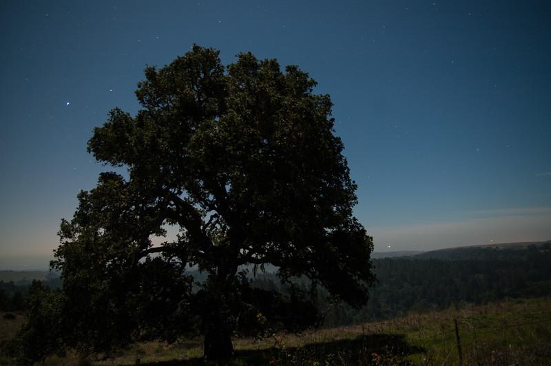 Starlight Landscape #1, Sonoma County, CA