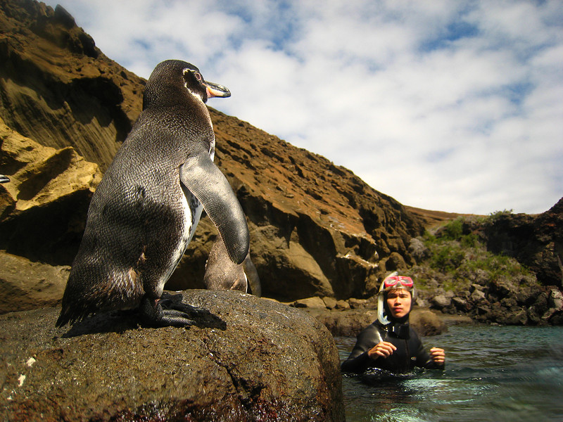Diving in the Galapagos (52 of 392)