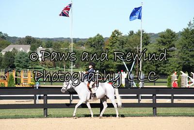 Sunday: Pleasure Horse or Pony