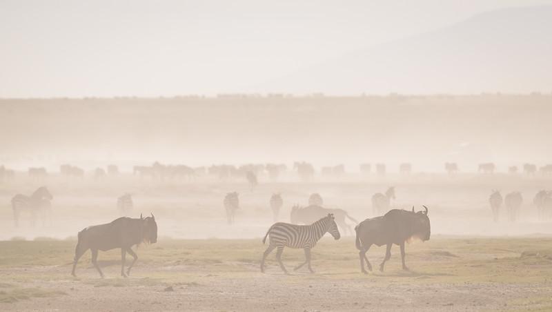 Tanzania_Feb_2018-391.jpg