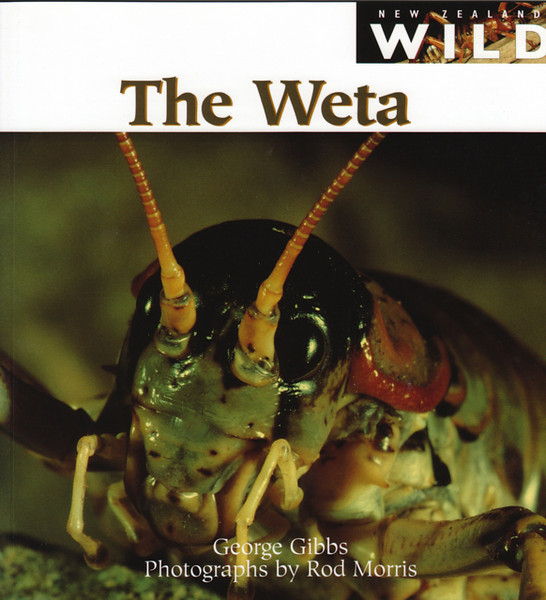 'New Zealand Wild: The Weta' is a fantastic gift for intermediate readers (age 8+) and can be purchased directly from us for $34.99 (+P&P). For more information contact the Production Manager at info@rodmorris.co.nz.