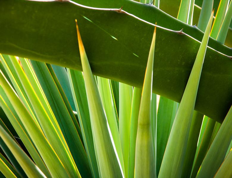 Cactus 2, Stanford University, California, 2005