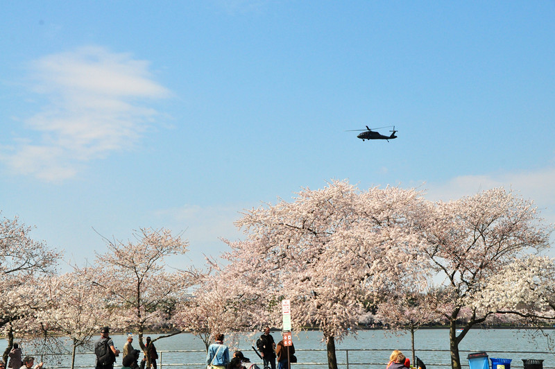 Cherry Blossoms 2014 021.jpg