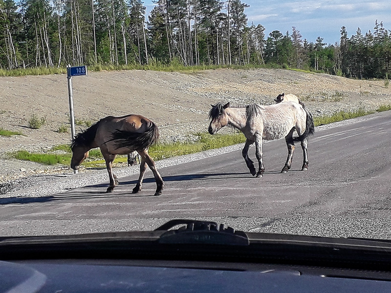 Horses Leaving Road