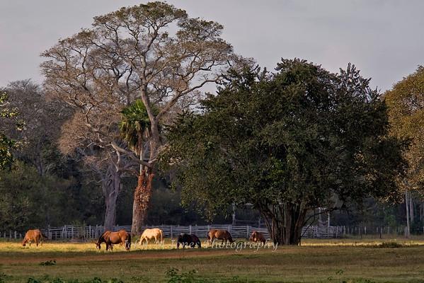 Brazil's Pantanal - Jul 2005