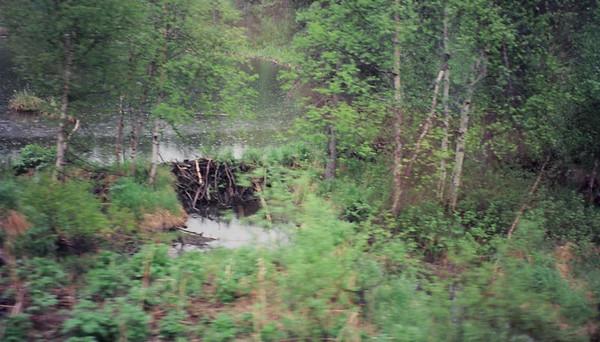 TRAVEL-Vancouver BC, Alaska-May/June 1997