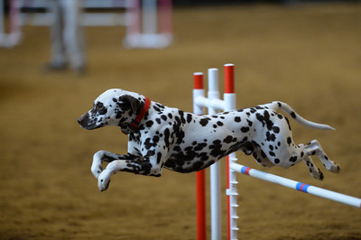 SOJAC AKC Agility Trial January 30-February 1