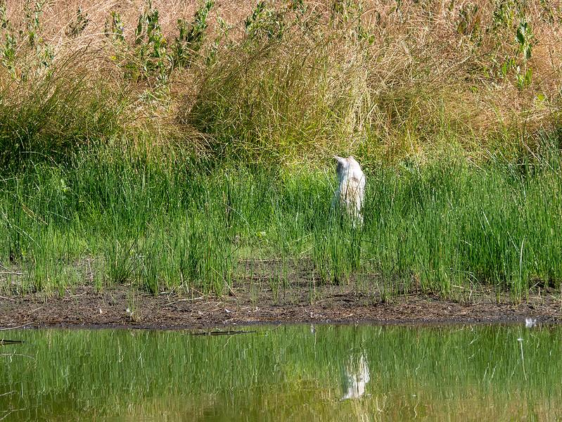 field cat.jpg