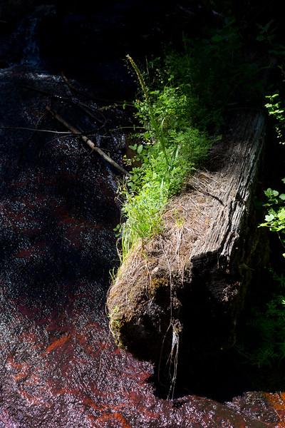 Sequoia_0319.jpg