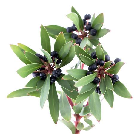 3. Tasmanian Pepper Berries