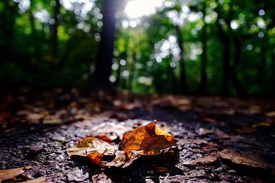 Herfstblad | Autumn leaf