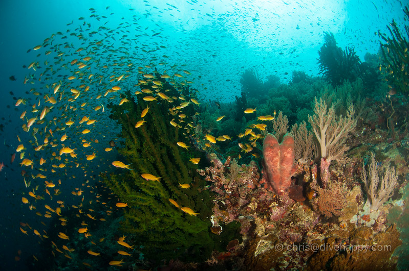 tubbataha-reef-2017-divehappy-chris-mitchell-5.jpg