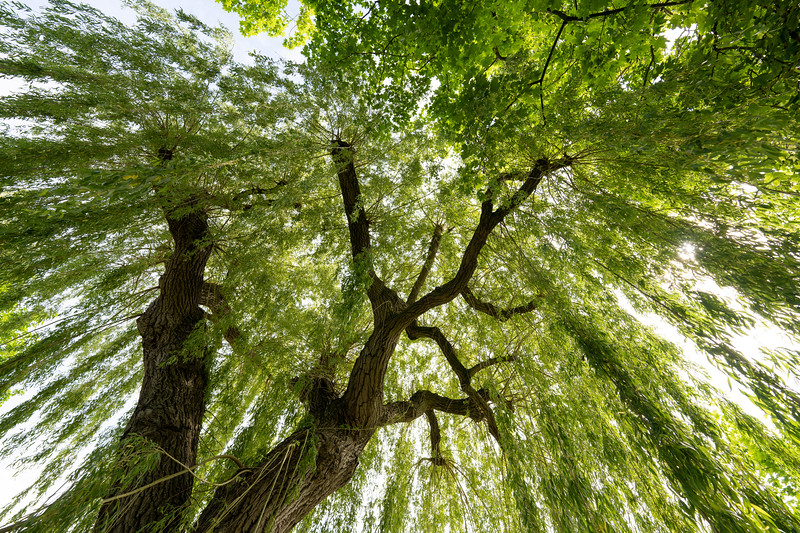 tree5-2.jpg