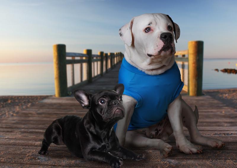 2dogs-pier.jpg
