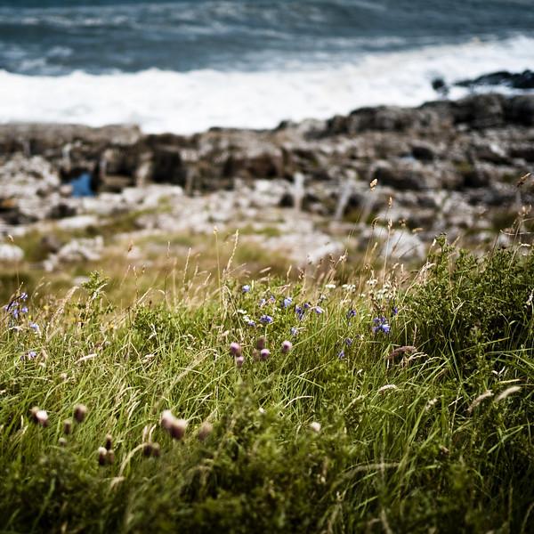 The coast by Craster, Northumberland UK