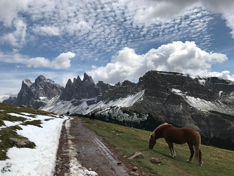 Autumn approaches the Dolomites with an early dusting of snow.  The horses attention is to the last of the green grass.  Erika Holm - self guided Dolomites 2017.  Entry to scenic image.