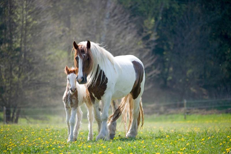 Photo courtesy of Christiane Slawik. http://www.slawik.com/en.