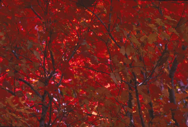 Fall 1984 - 001.jpg