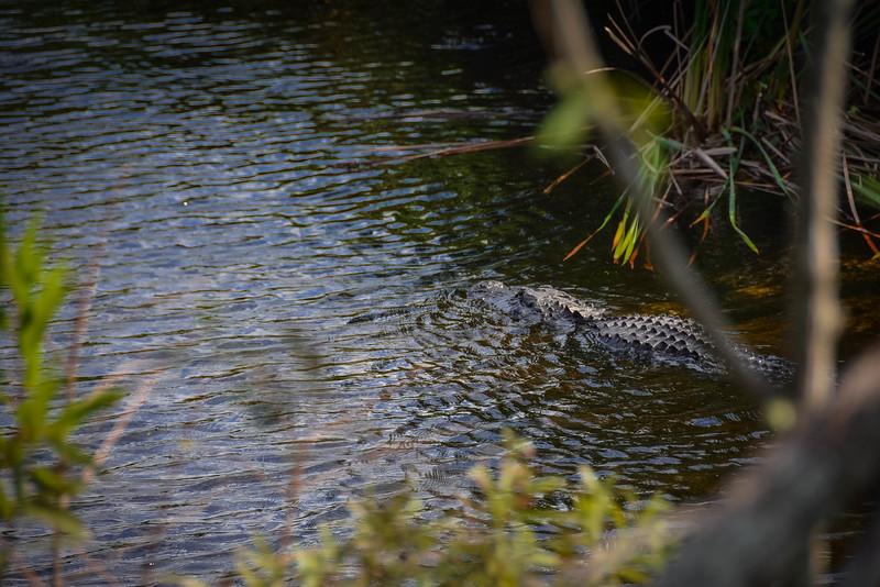 Everglades-14.jpg