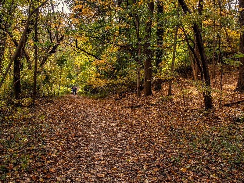November 9 - Rock Creek Park_ Washington_ DC.jpg