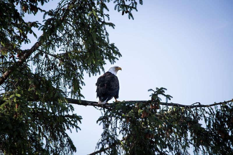 Port Hardy - Vancouver Island, British Columbia, Canada