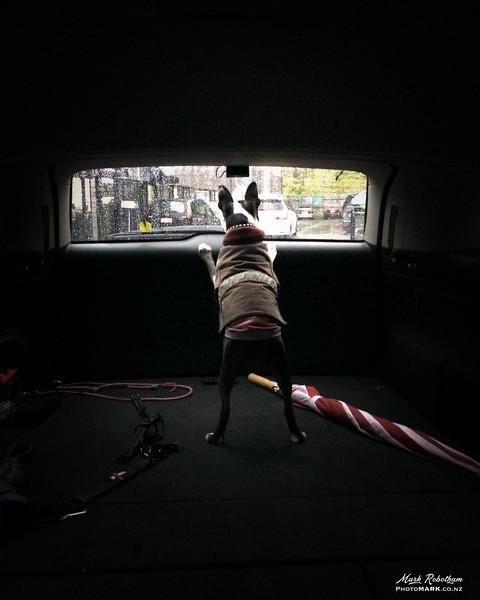 Ralph car window 2.jpg