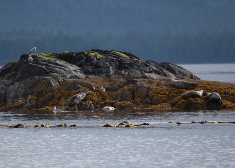 Alaska-123.jpg
