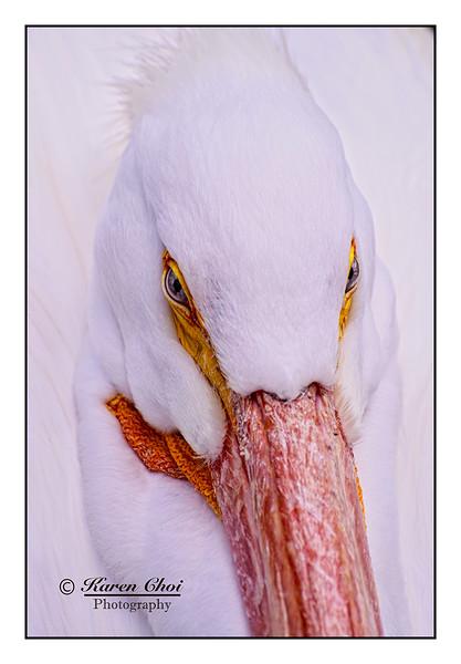 Headshot white bird sm.jpg