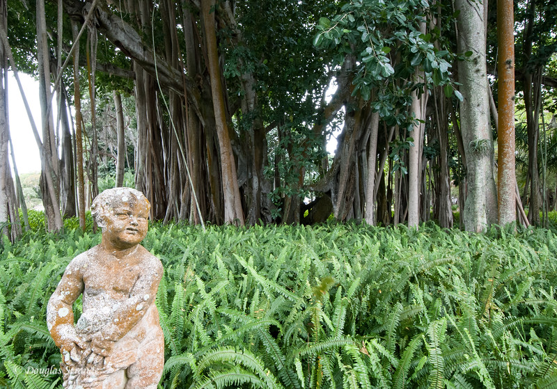 Statue and Banyan Tree at the Ringling Museum
