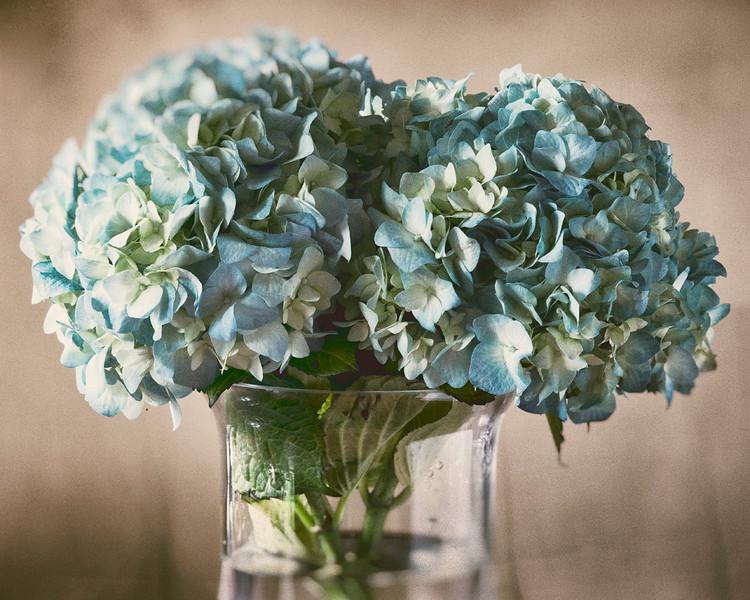 hydrangeas-in-vase.jpg
