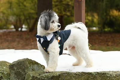 Skyland Manor Dog Photo Shoot -11-19-18