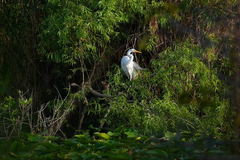 Everglades (58 of 60).jpg