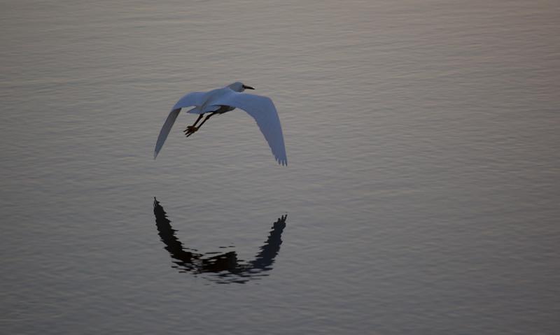 egret-bif-sunset-baylands.jpg