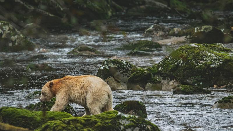 White Bear at Riordan Creek September 2019-8.jpg