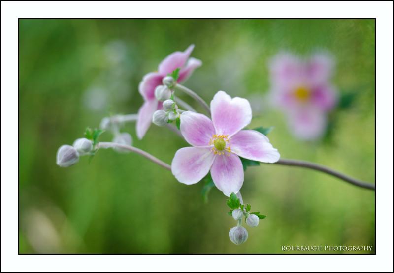 Rohrbaugh Photography Flowers 24.jpg