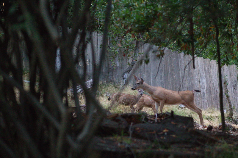 Deer fam #2 on the move
