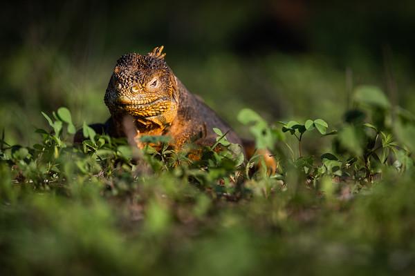 Fauna Galápagos