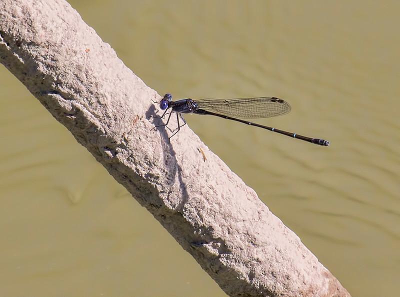 Male;  Anzalduas Park, TX