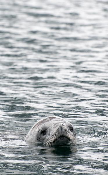 Antarctica 2015 (7 of 99).jpg
