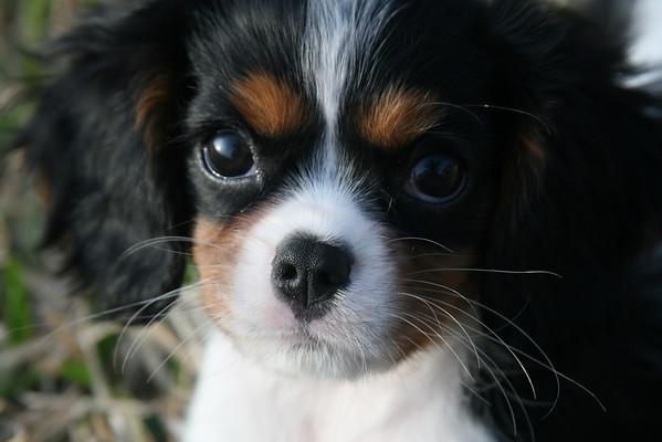 Lexi - Sally's Dog