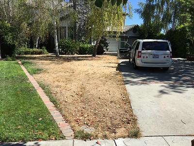 Dead lawn photos