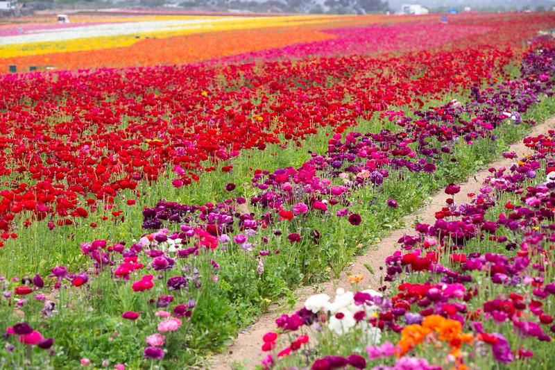 Spring Flowers B-380.jpg